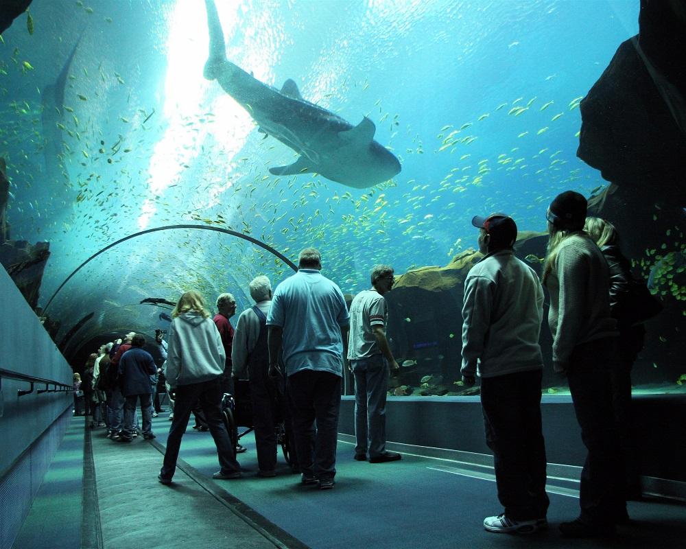 Gas South Georgia Aquarium Offer
